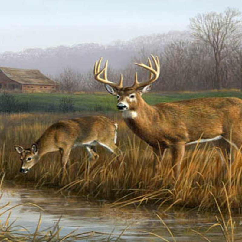 10 New Deer Hunting Desktop Wallpaper FULL HD 1920×1080 For PC Desktop 2018 free download deer hunting backgrounds wallpaper cave 1 800x800
