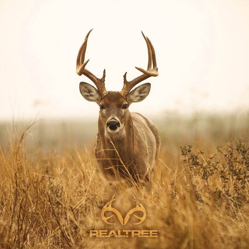 10 New Deer Hunting Desktop Wallpaper FULL HD 1920×1080 For PC Desktop 2018 free download deer hunting desktop decor pinterest hunting wallpaper and 800x800