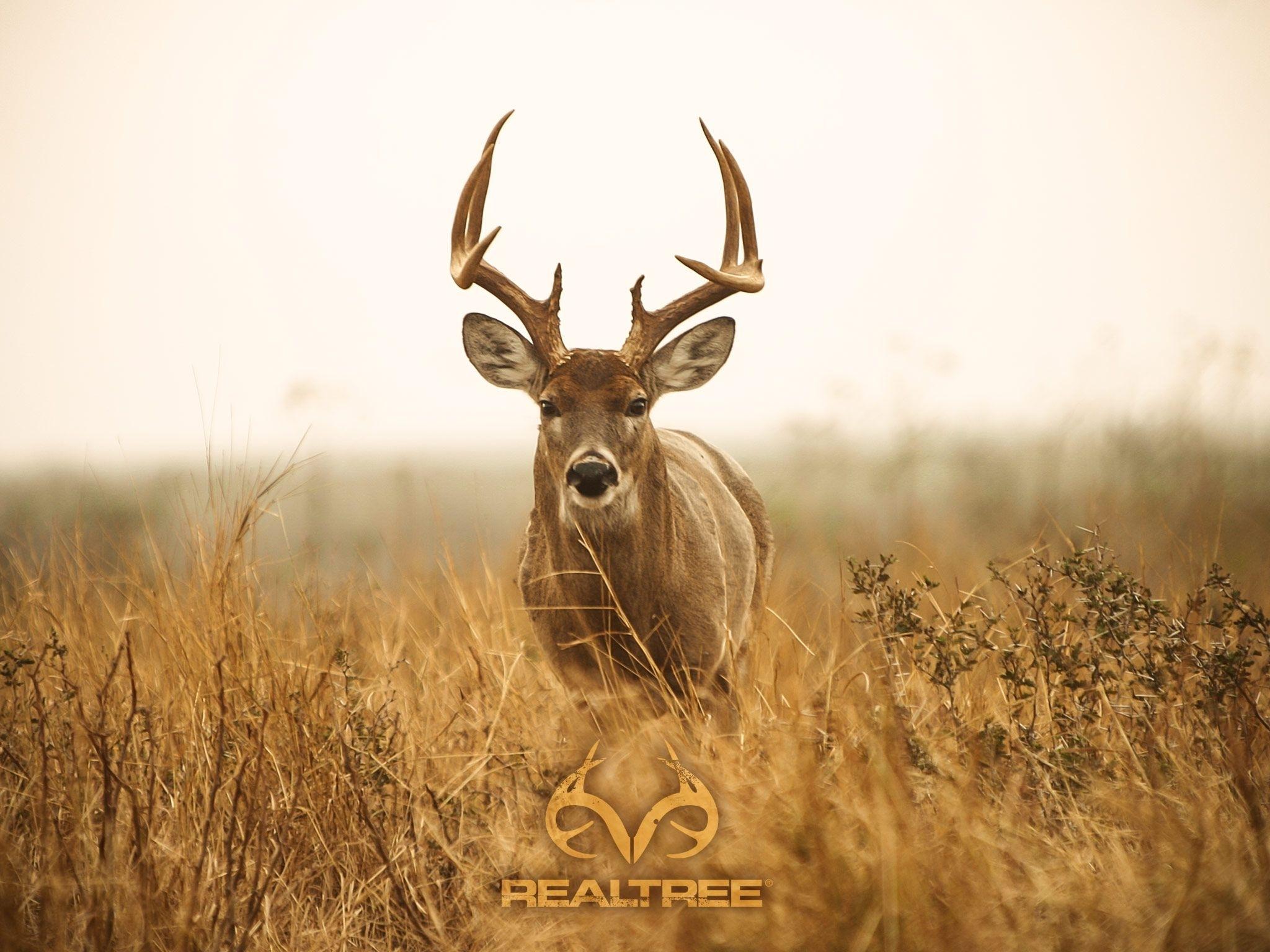 deer hunting desktop. | decor | pinterest | hunting wallpaper and