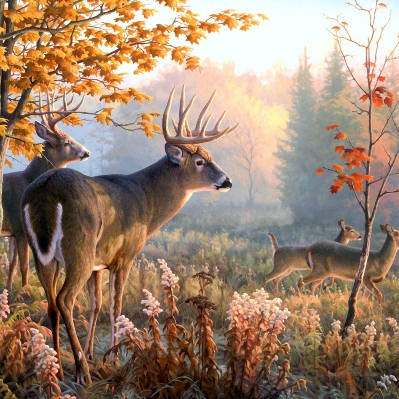 10 New Deer Hunting Desktop Wallpaper FULL HD 1920×1080 For PC Desktop 2018 free download deer wallpapers 4 animals wallpapers pinterest deer wallpaper 800x800