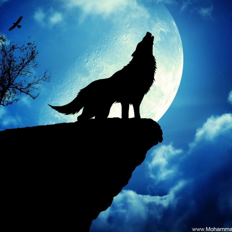 10 New Cool Wolf Desktop Backgrounds FULL HD 1080p For PC Background 2020 free download desktop backgrounds wolf group 80 800x800