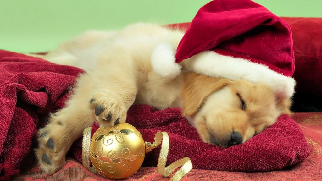 10 New Cute Puppy Christmas Pictures FULL HD 1920×1080 For PC Background 2020 free download desktop cute puppy christmas pics 1024x576