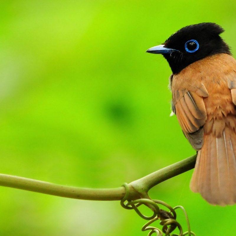 10 Most Popular Birds Full Hd Wallpapers FULL HD 1920×1080 For PC Desktop 2018 free download desktop full hd wallpapers birds download 800x800