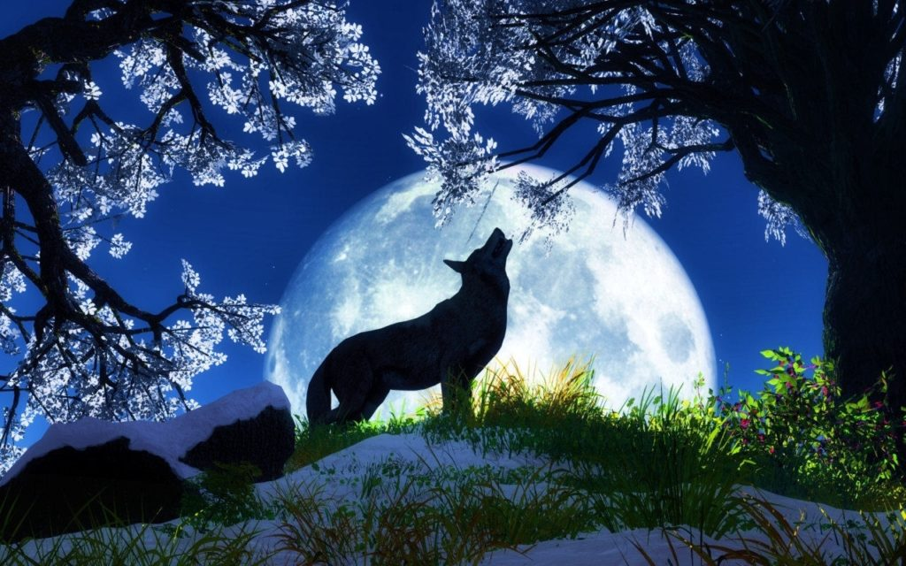 10 Top Cool Animal Wallpapers Wolf FULL HD 1920×1080 For PC Desktop 2018 free download desktop hd beautiful wallpaper of animals 1024x640