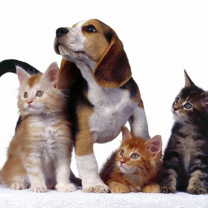 10 Top Cats And Dog Wallpapers FULL HD 1920×1080 For PC Desktop 2020 free download desktop images of funny cats and dogs wallpaper 800x800
