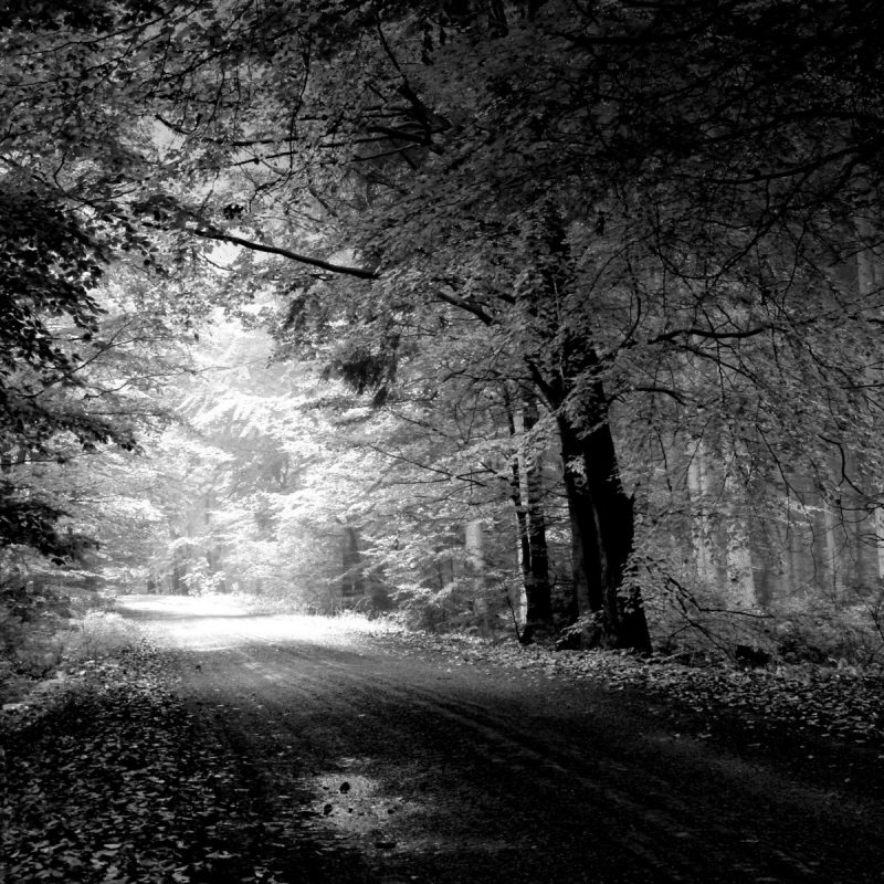 10 Top Pictures Of Nature In Black And White FULL HD 1080p For PC Background 2021 free download desktop nature pictures black and white dowload 1 800x800