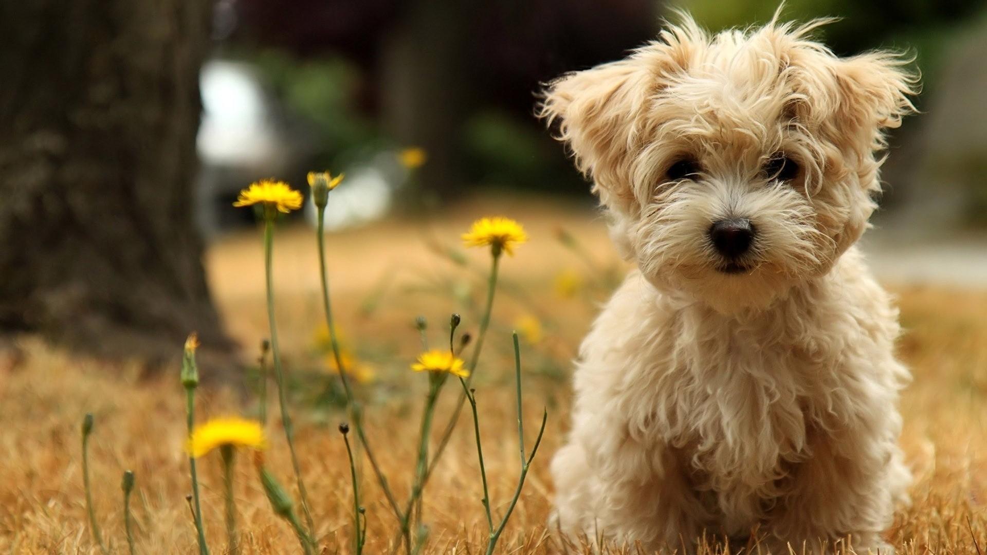 desktop wallpaper puppies - 2018 cute screensavers
