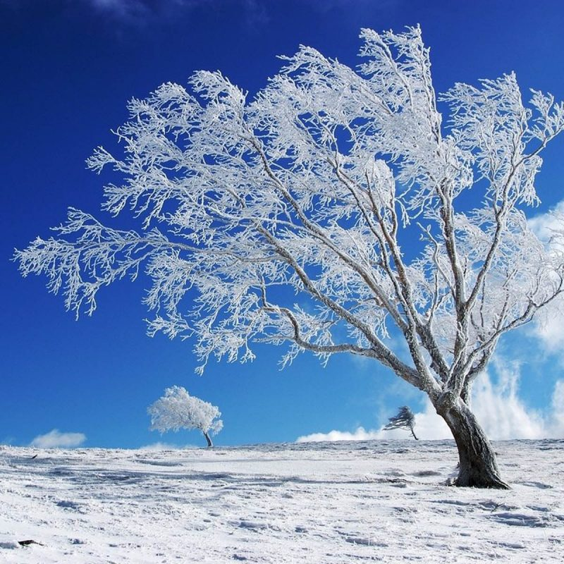 10 Top Seasonal Wallpaper For Desktop FULL HD 1080p For PC Desktop 2020 free download desktop wallpaper winter desktop background media file 800x800