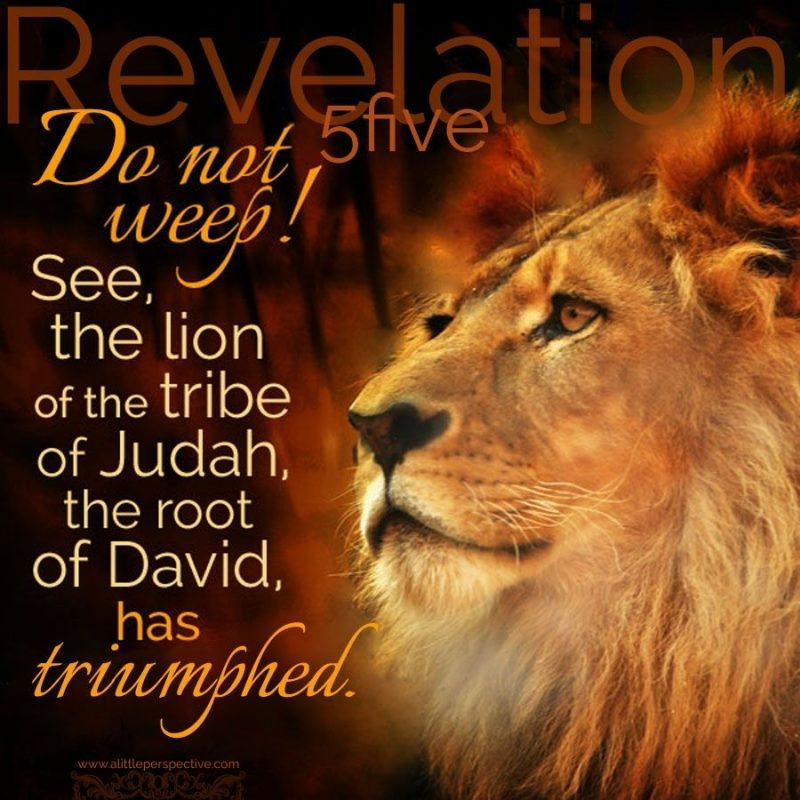 10 Latest Lion Of Judah Images FULL HD 1080p For PC Background 2020 free download do not weep see the lion of the tribe of judah the root of david 1 800x800