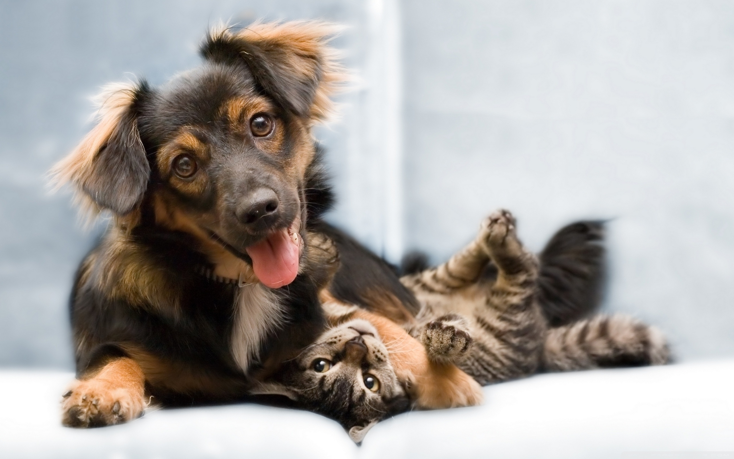 dog and cat friendship ❤ 4k hd desktop wallpaper for 4k ultra hd tv