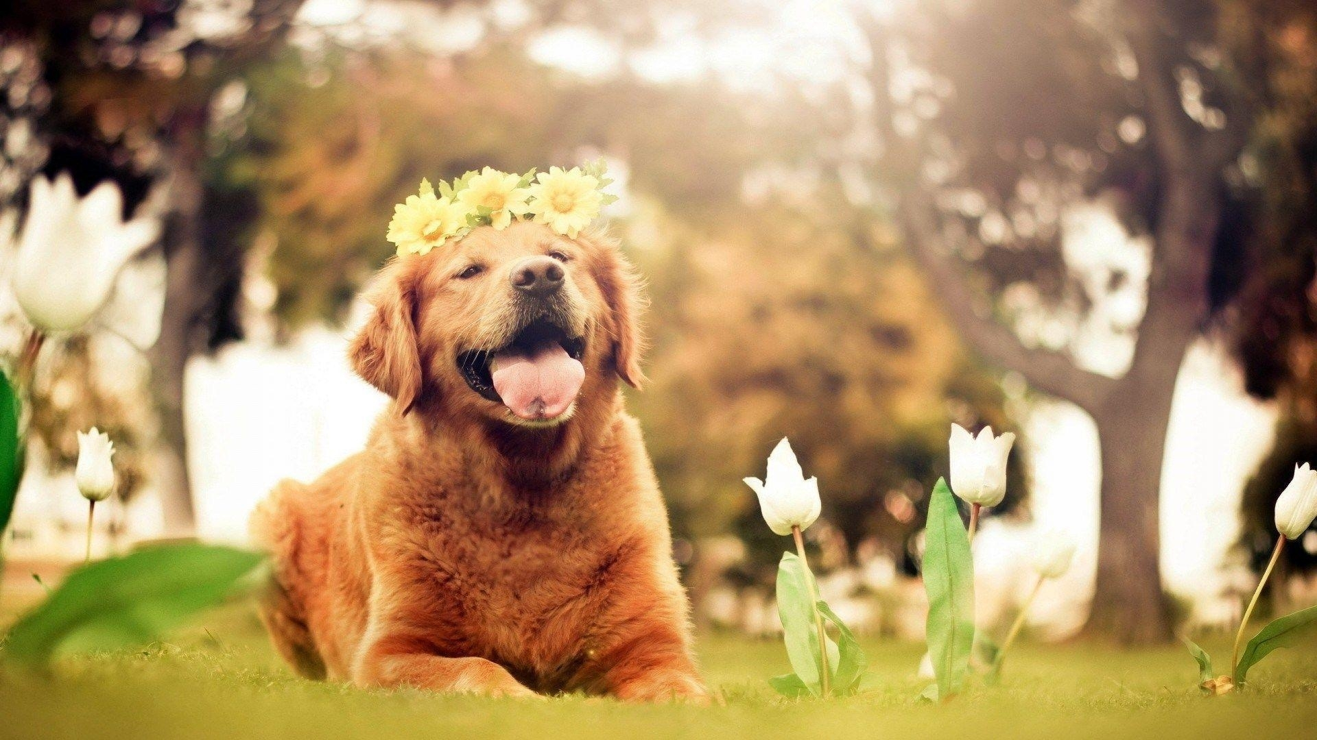 10 Top Dog Backgrounds For Computer FULL HD 1080p For PC Background