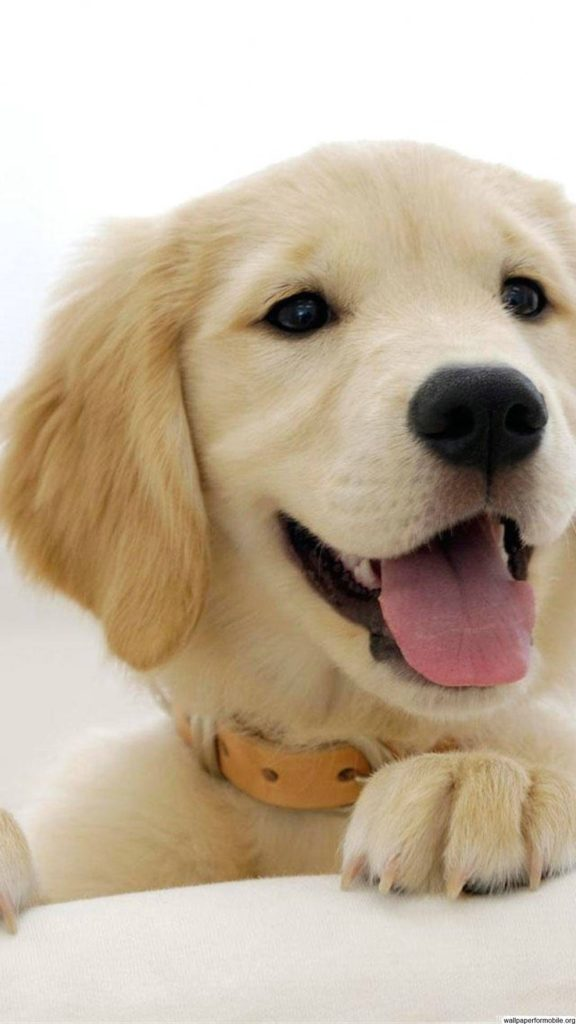 10 Best Dog Wallpaper For Android FULL HD 1920×1080 For PC Desktop 2018 free download dog wallpaper for android mobile wallpapers 576x1024
