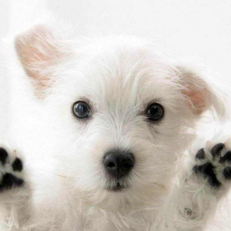 10 Top Cute Dogs For Wallpaper FULL HD 1080p For PC Desktop 2018 free download dog wallpapers and screensavers wallpapers pinterest dog 800x800