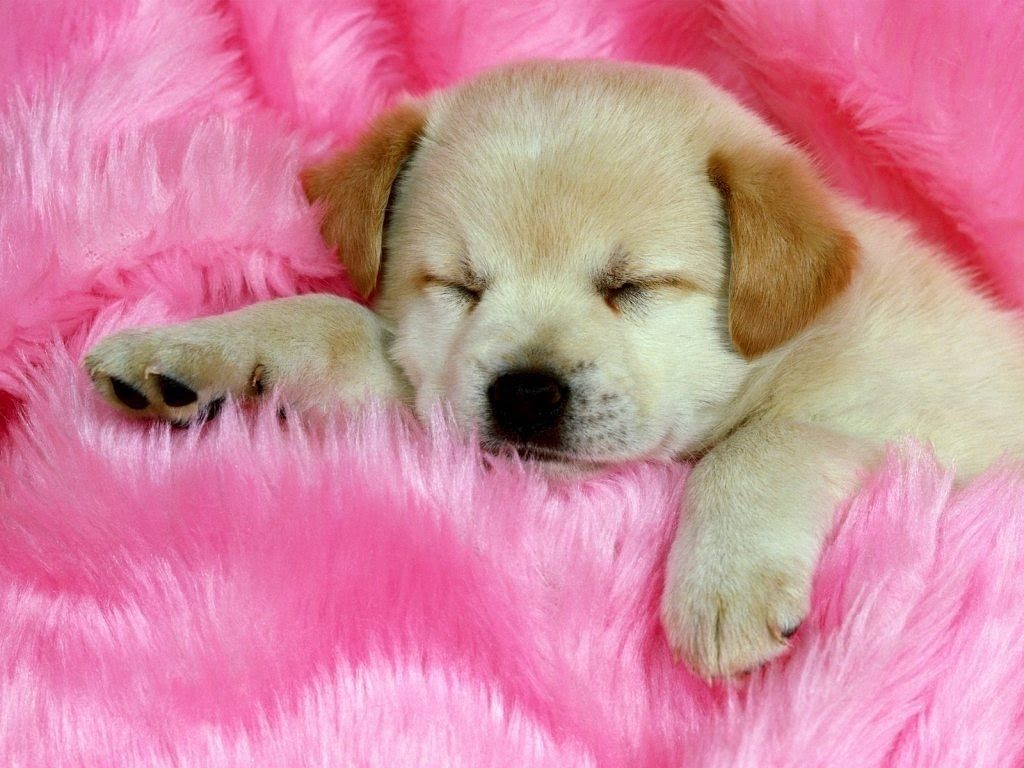 10 Best Dog Wallpaper For Android FULL HD 1920×1080 For PC Desktop 2018 free download dog wallpapers android app youtube 1024x768