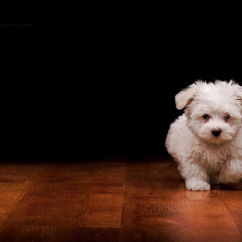 10 Top Dog Desktop Backgrounds Free FULL HD 1920×1080 For PC Desktop 2018 free download dog wallpapers phone desktop wallpaper box 800x800