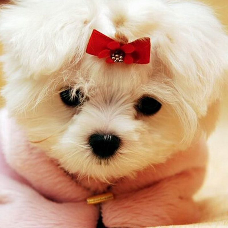 10 Top Cute Dogs For Wallpaper FULL HD 1080p For PC Desktop 2018 free download dogs wallpapers full hd p best hd dogs wallpapers hd wallpapers 800x800