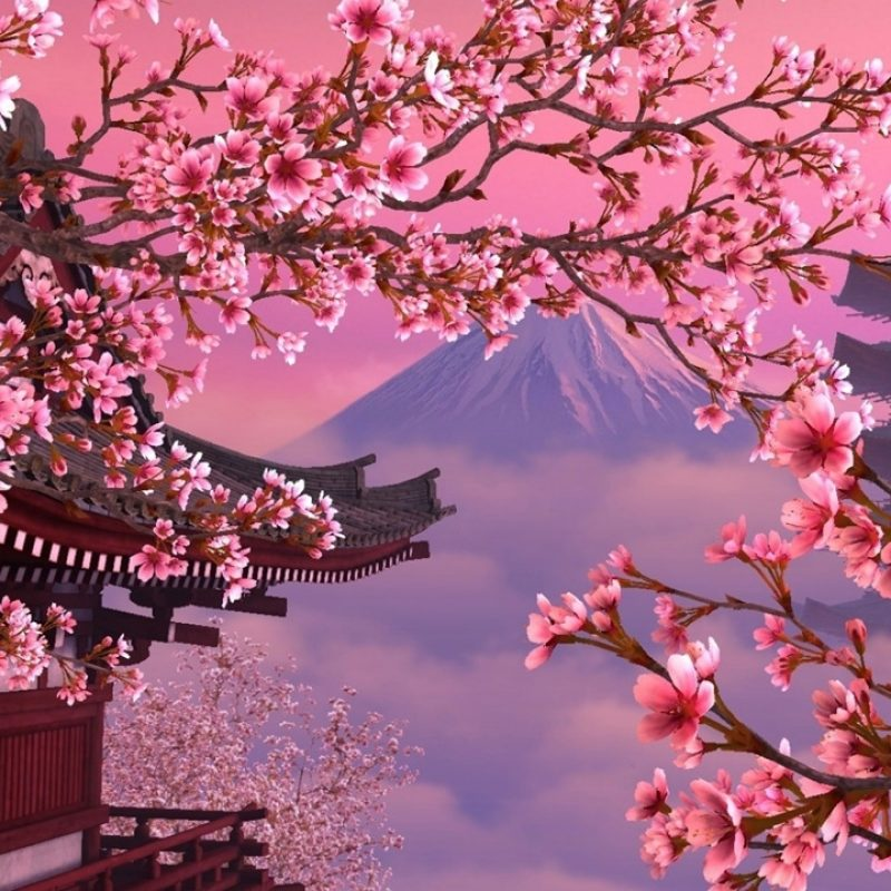 10 New Hd Wallpapers Cherry Blossom FULL HD 1920×1080 For PC Background 2018 free download download cherry blossom desktop wallpapers wallpaper cave 800x800