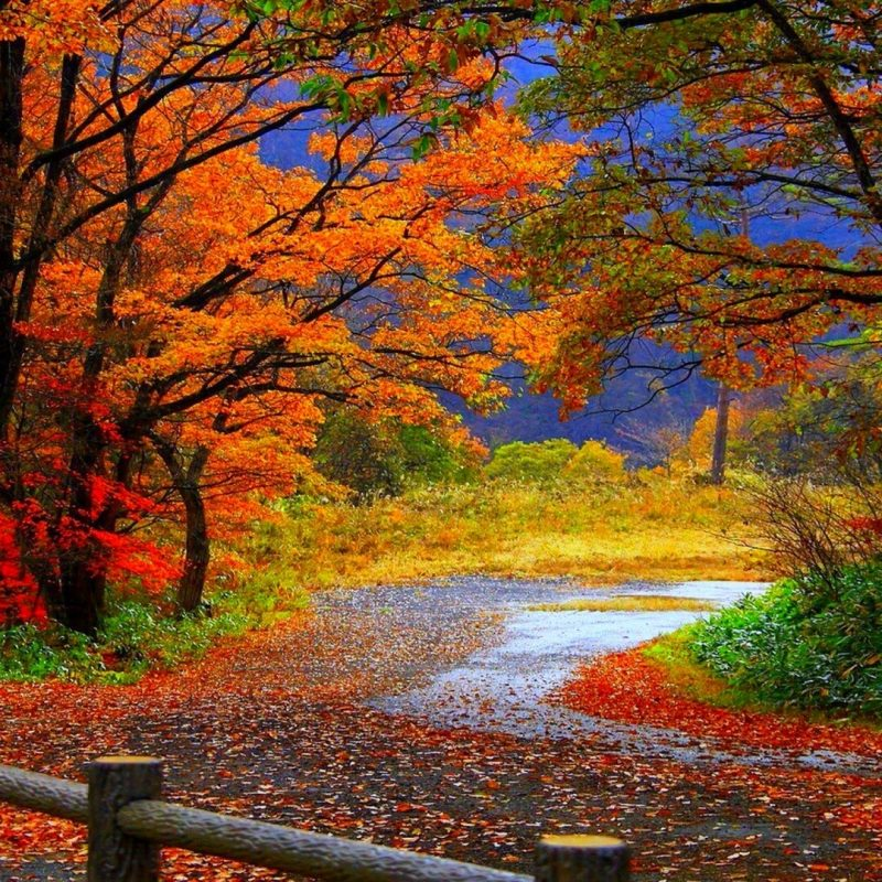 10 New Fall Scene Desktop Background FULL HD 1080p For PC Background 2018 free download %name