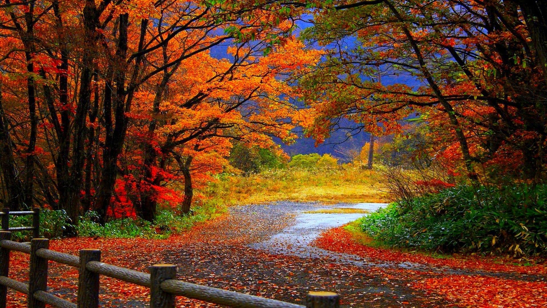 download fall desktop images. - media file | pixelstalk