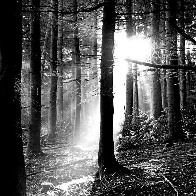 10 New Black And White Forest Wallpaper FULL HD 1920×1080 For PC Background 2018 free download download free black and white forest wallpaper pixelstalk 800x800
