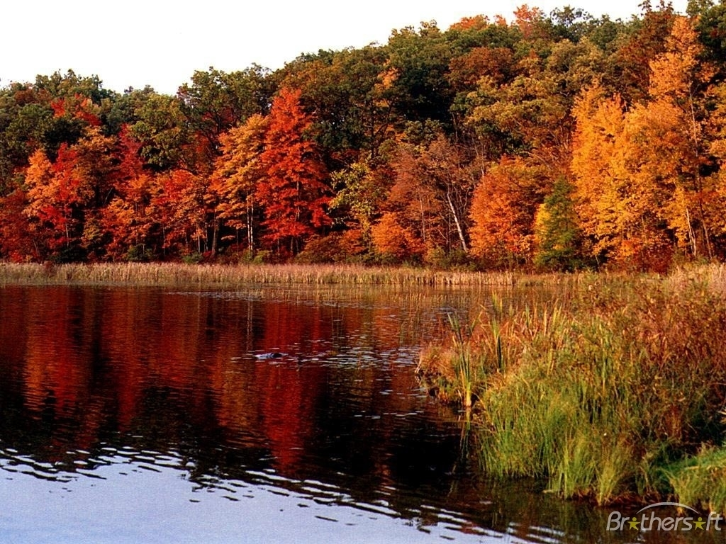 download free fall leaves wallpaper, fall leaves wallpaper download