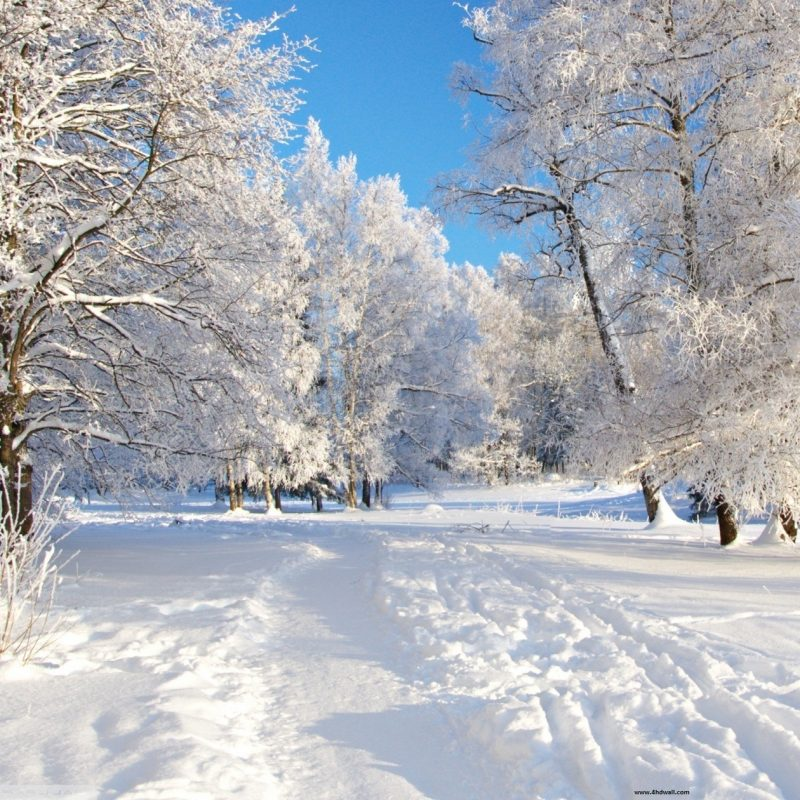 10 New Free Winter Wallpaper Download FULL HD 1080p For PC Desktop 2020 free download download free high definition winter backgrounds media file 1 800x800