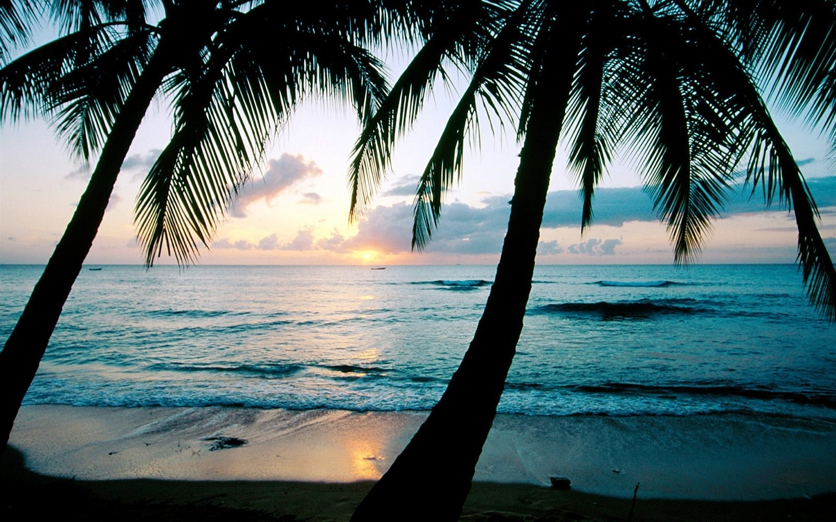 download hd palm tree wallpapers and photos hd beach wallpapers