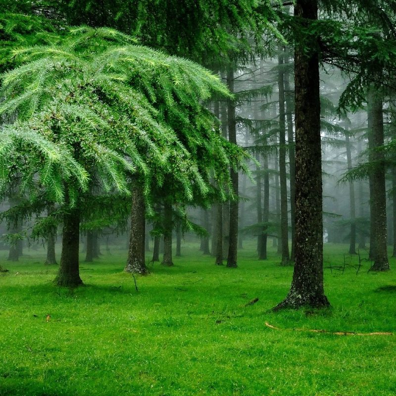 10 Most Popular Forest Wallpaper Hd 1080P FULL HD 1920×1080 For PC Background 2018 free download download wallpaper 1920x1080 forest fog grass spruce trees full 800x800