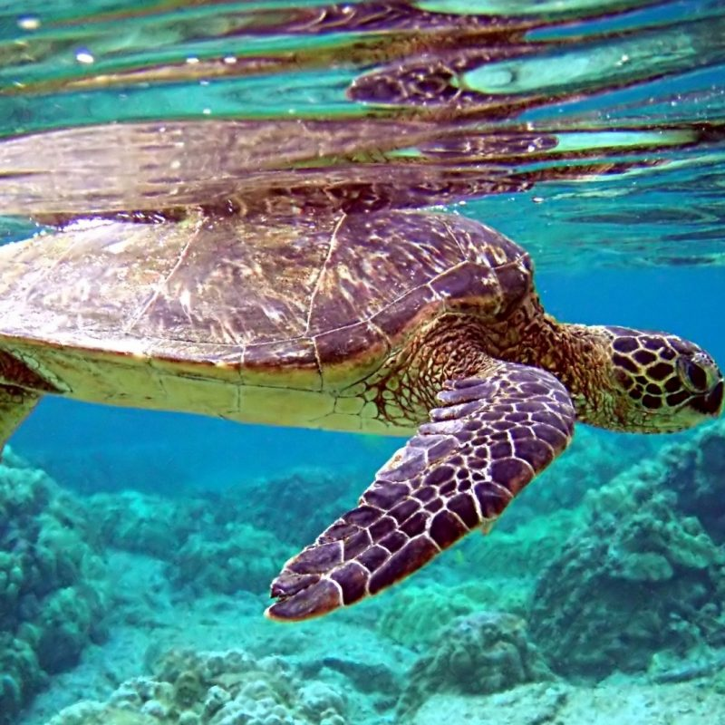 10 New Hd Wallpapers 1080P Underwater FULL HD 1920×1080 For PC Desktop 2018 free download download wallpaper 1920x1080 turtle underwater swimming water 800x800