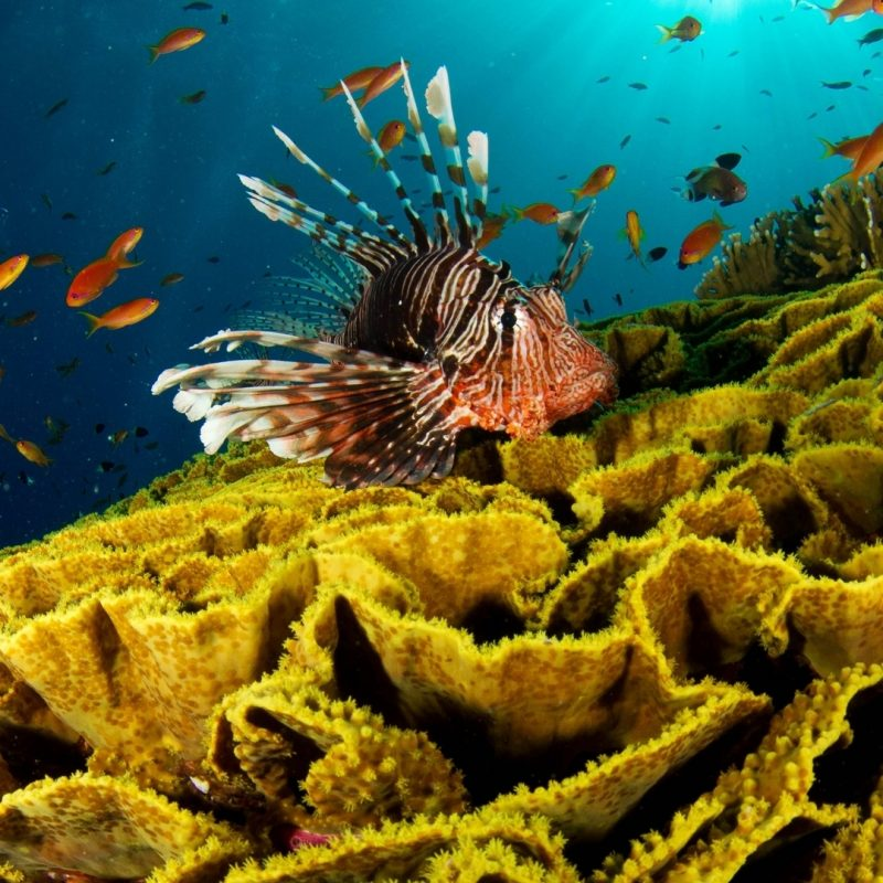 10 New Hd Wallpapers 1080P Underwater FULL HD 1920×1080 For PC Desktop 2018 free download download wallpaper 1920x1080 underwater fish corals full hd 1080p 800x800