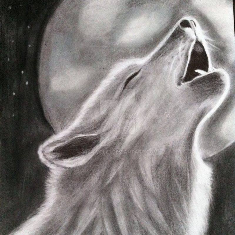 10 Most Popular Drawing Of A Wolf Howling At The Moon FULL HD 1080p For PC Background 2021 free download drawing of a wolf howling on the moonvikawolf1 on deviantart 1 800x800