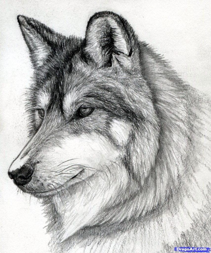 10 Most Popular Wolf Howling At The Moon Drawing FULL HD 1080p For PC Background 2018 free download drawing of a wolf howling pencil sketches of wolves howling at the 855x1024