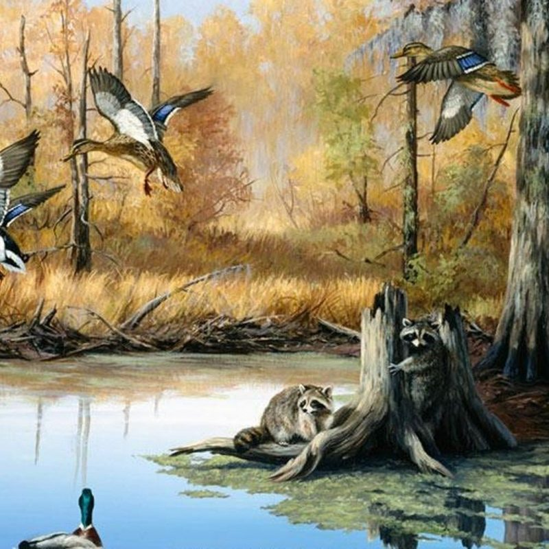 10 New Duck Hunting Desktop Wallpaper FULL HD 1920×1080 For PC Desktop 2018 free download duck hunting hd background ololoshenka pinterest hd backgrounds 800x800