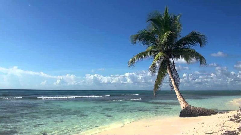 10 New Palm Tree And Beach Pictures FULL HD 1080p For PC Background 2018 free download e299a5e299a5 relaxing 3 hour video of tropical beach with blue sky white 800x450