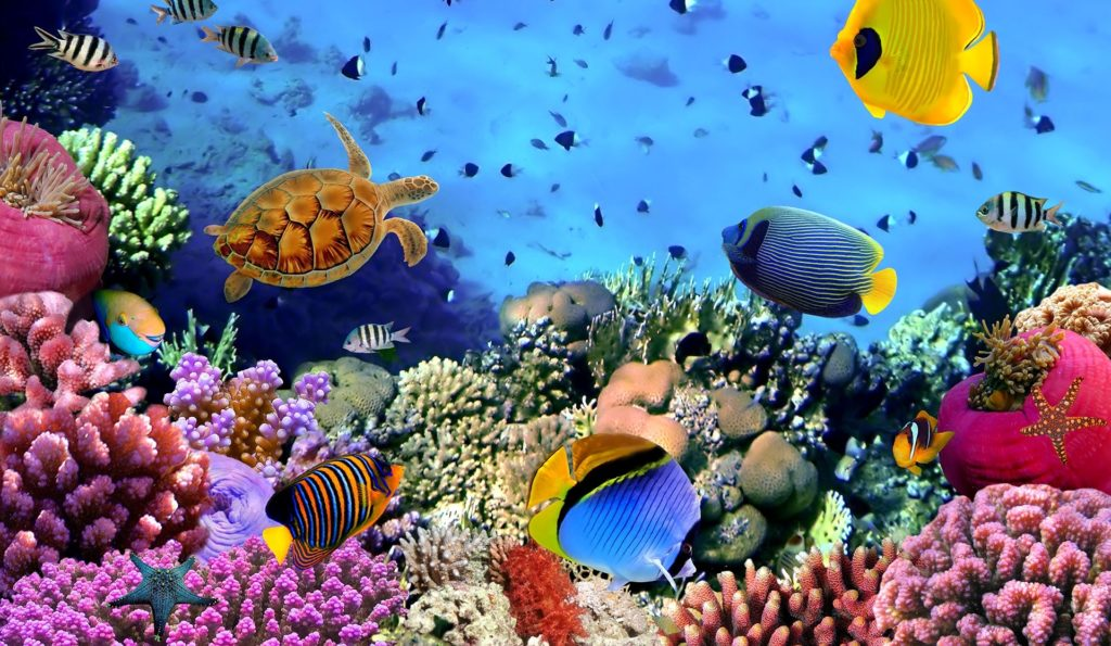 10 New Cool Underwater Desktop Backgrounds FULL HD 1920×1080 For PC Desktop 2020 free download e299a5underwatere299a5 desktop background deerfield public library 1024x595