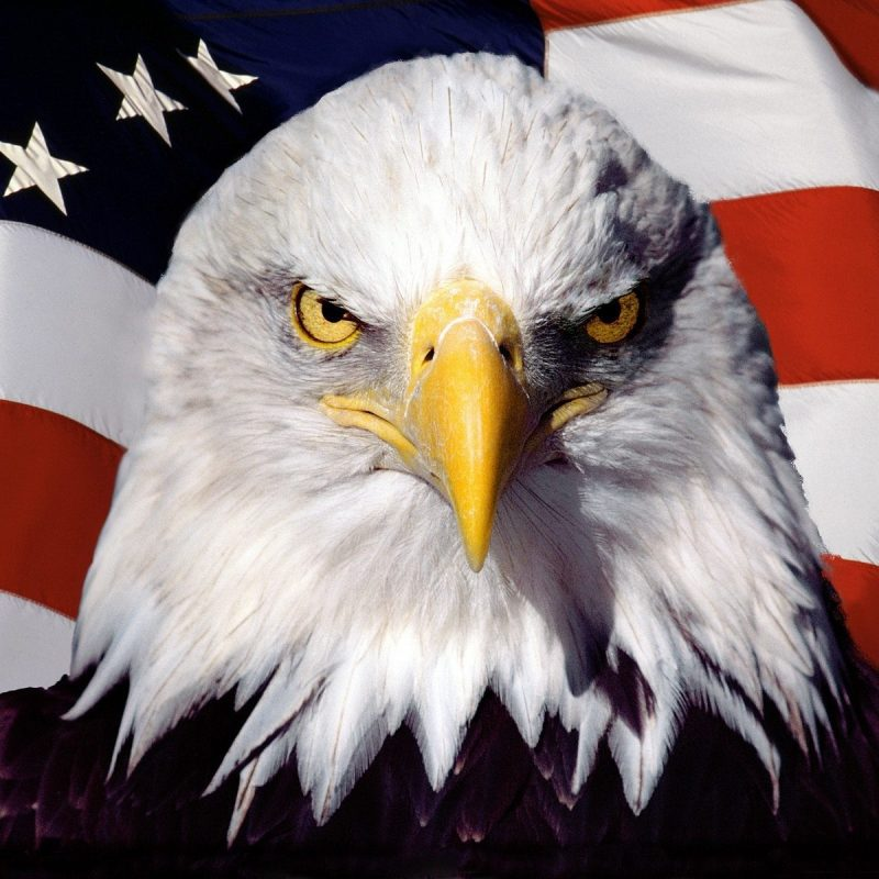 10 Latest American Flag Eagle Background FULL HD 1080p For PC Desktop 2021 free download eagle on the background of the american flag wallpapers and images 800x800
