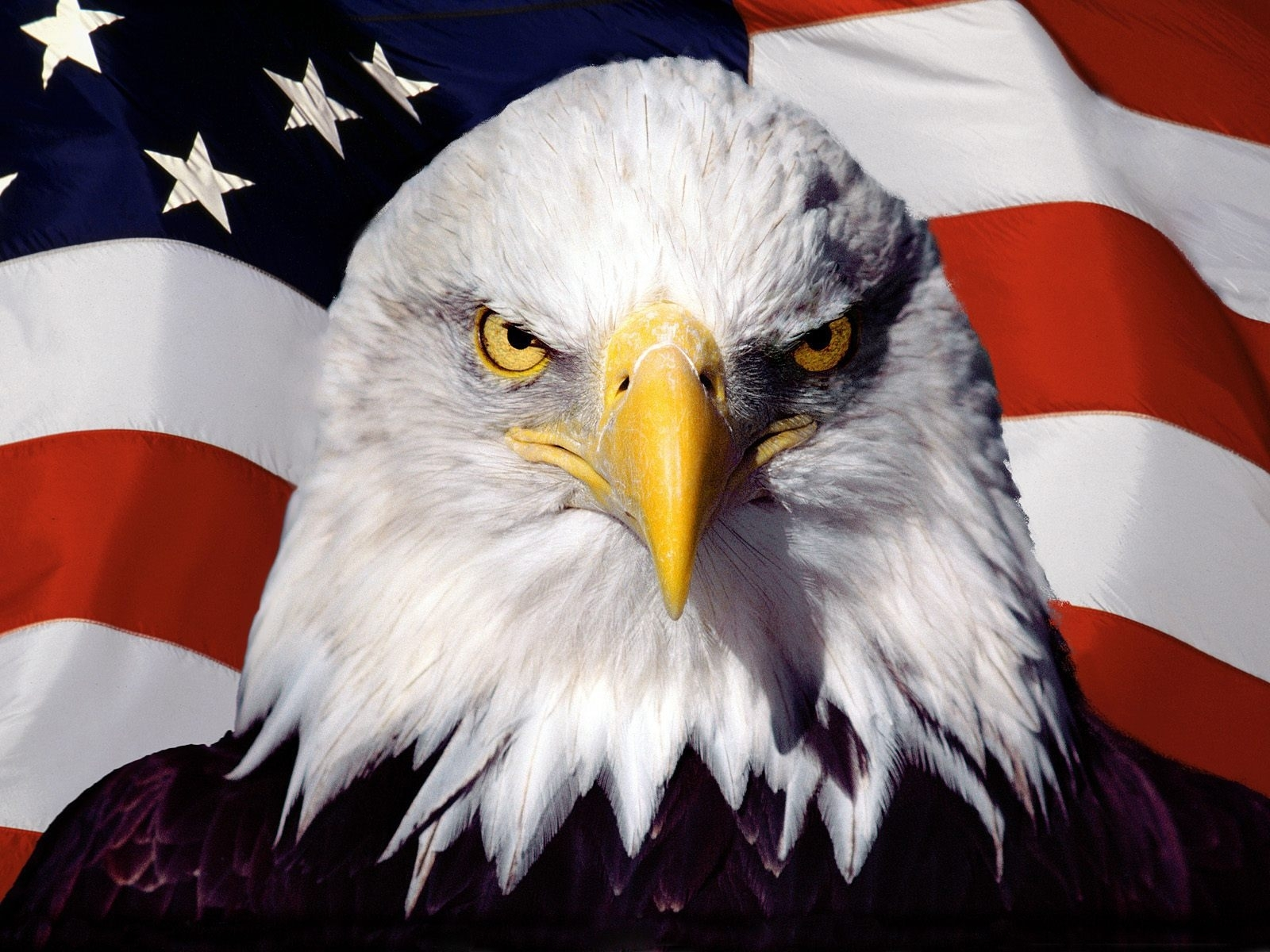 eagle on the background of the american flag wallpapers and images