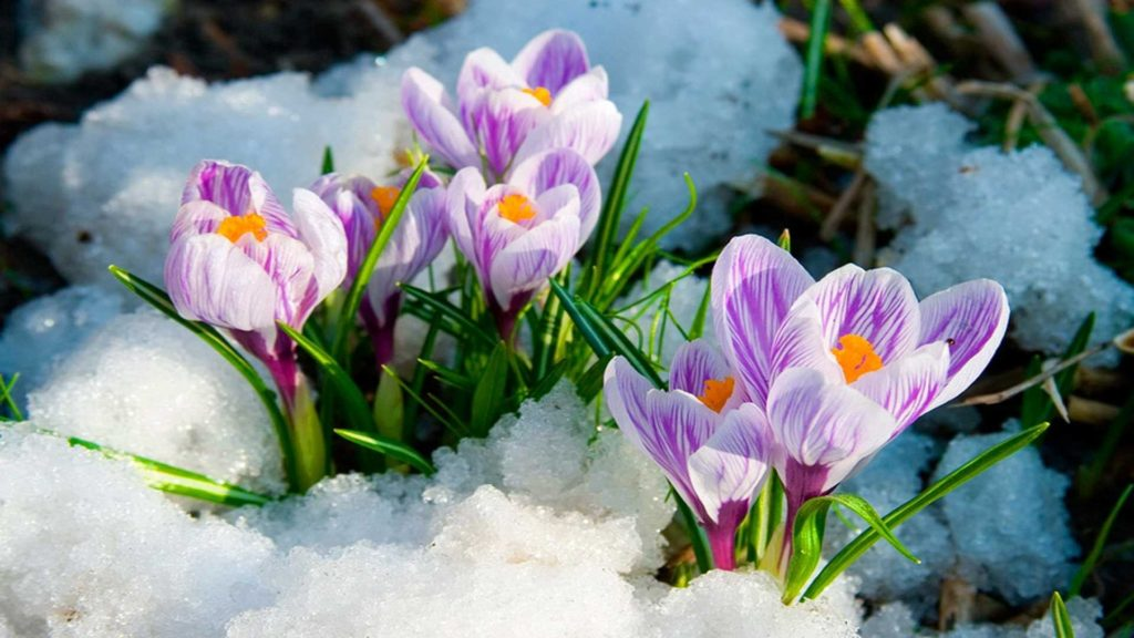 10 Top Early Spring Pictures Desktop Background FULL HD 1920×1080 For PC Background 2020 free download %name