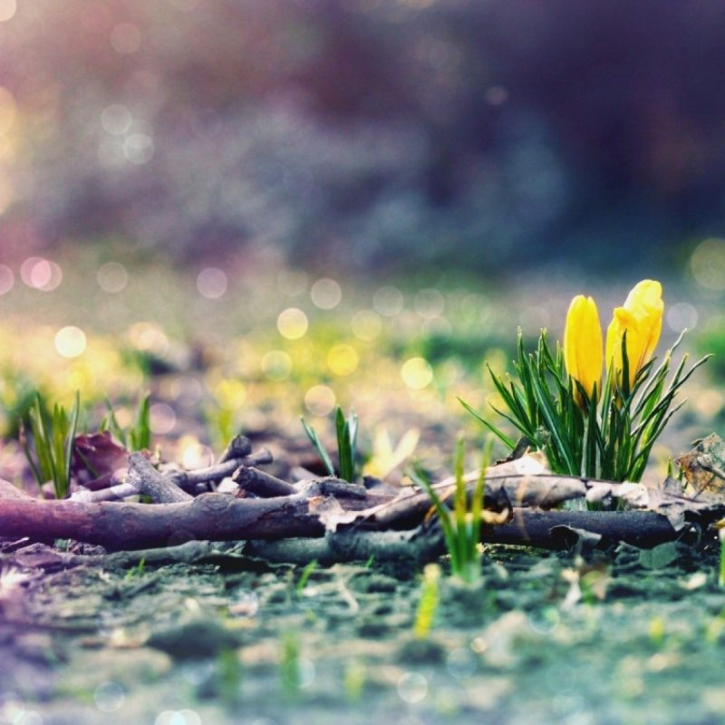 10 Top Early Spring Wallpaper Hd FULL HD 1080p For PC Background 2020 free download early spring hd wallpaper 50 images 800x800