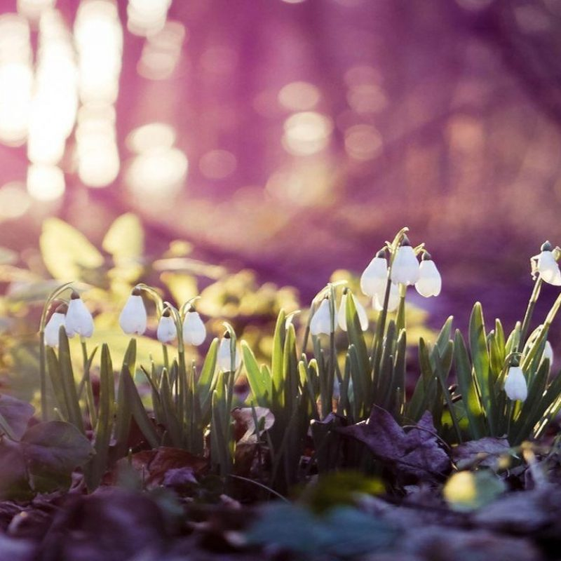 10 Top Early Spring Wallpaper Hd FULL HD 1080p For PC Background 2020 free download early spring wallpapers wallpaper cave 3 800x800
