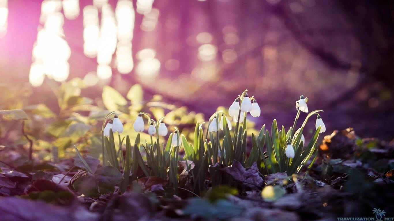 early spring wallpapers - wallpaper cave