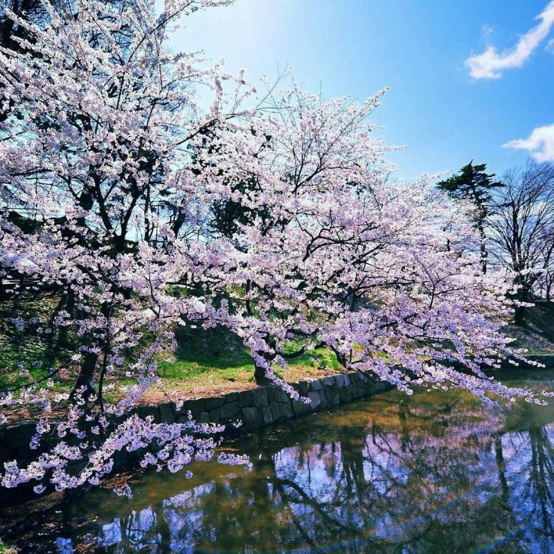 10 New Early Spring Desktop Background FULL HD 1920×1080 For PC Desktop 2020 free download early spring wallpapers wallpaper cave 5 800x800