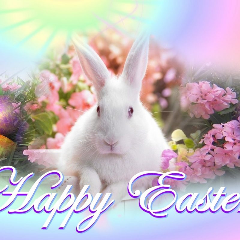 10 Latest Free Easter Desktop Backgrounds FULL HD 1920×1080 For PC Background 2018 free download easter desktop backgrounds collection 20 media file pixelstalk 1 800x800