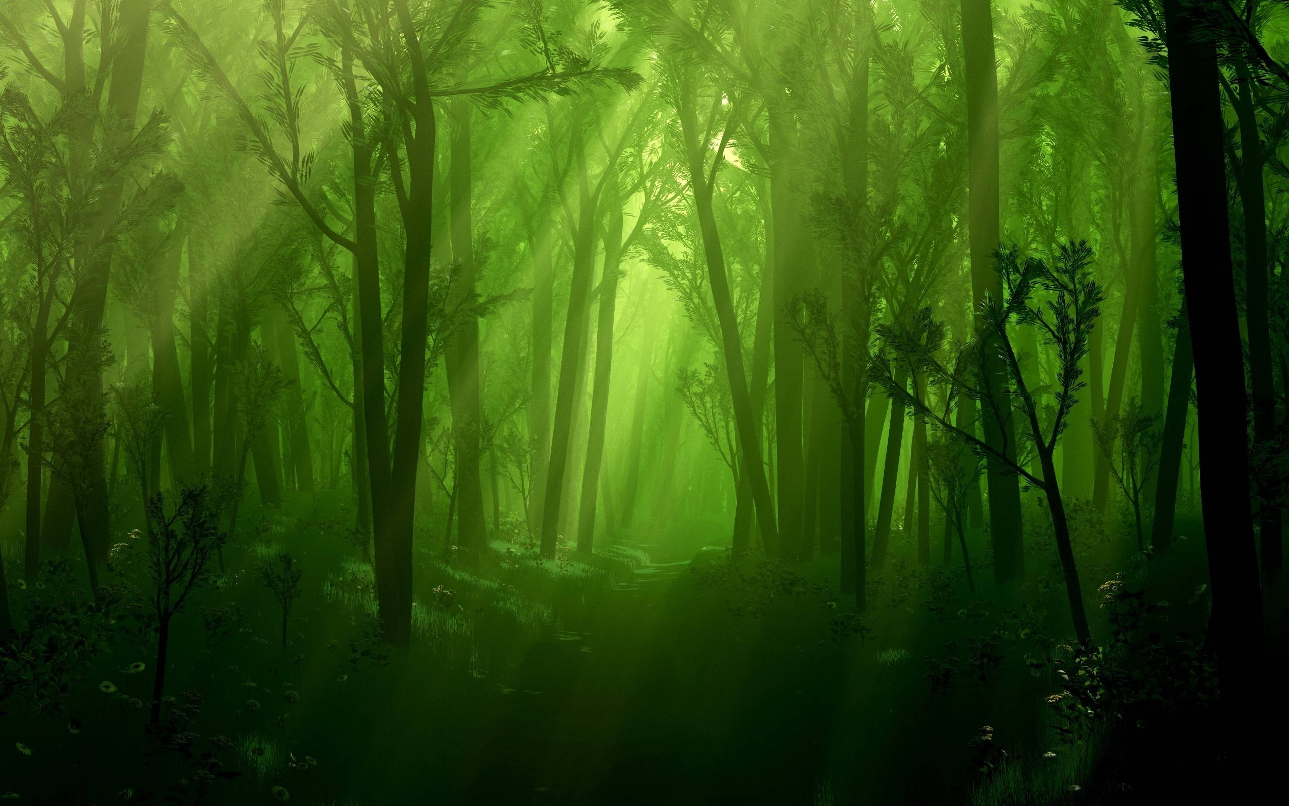 10 Most Popular Dark Enchanted Forest Background FULL HD 1920×1080 For PC Background