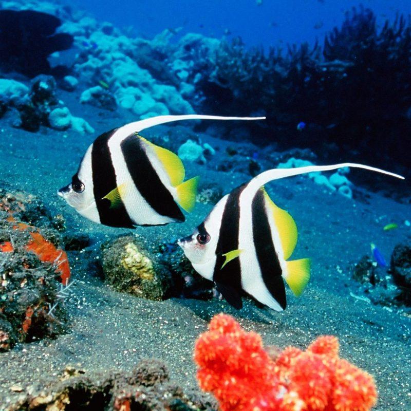 10 Top Tropical Fish Wallpaper Hd FULL HD 1920×1080 For PC Desktop 2018 free download everybodys favorites images tropical fish hd wallpaper and 800x800