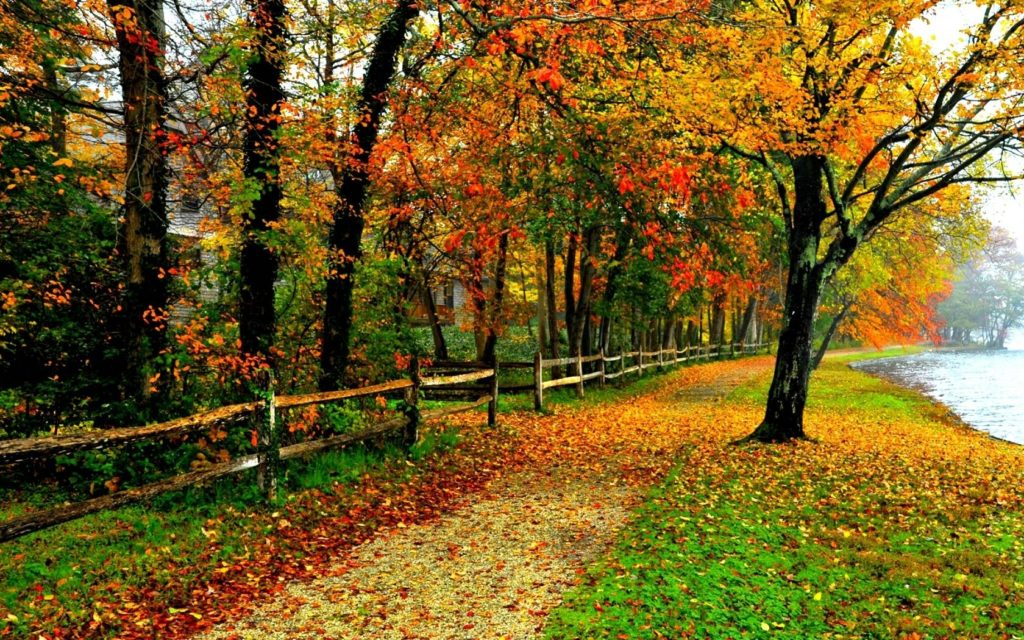 10 New Fall Colors Wallpaper Background FULL HD 1080p For PC Background 2018 free download fall colors wallpaper backgrounds wallpaper cave 1024x640
