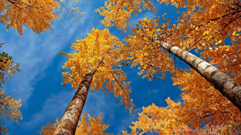 10 Latest Fall Desk Top Pictures FULL HD 1080p For PC Background 2018 free download fall desktop backgrounds wallpaper cave 1024x576