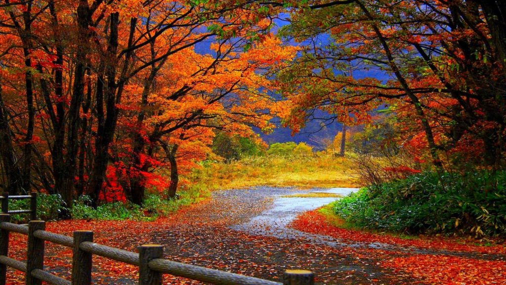 10 Latest Fall Desk Top Pictures FULL HD 1080p For PC Background 2018 free download fall desktop backgrounds with autumn tree in hd inspirations 1024x576