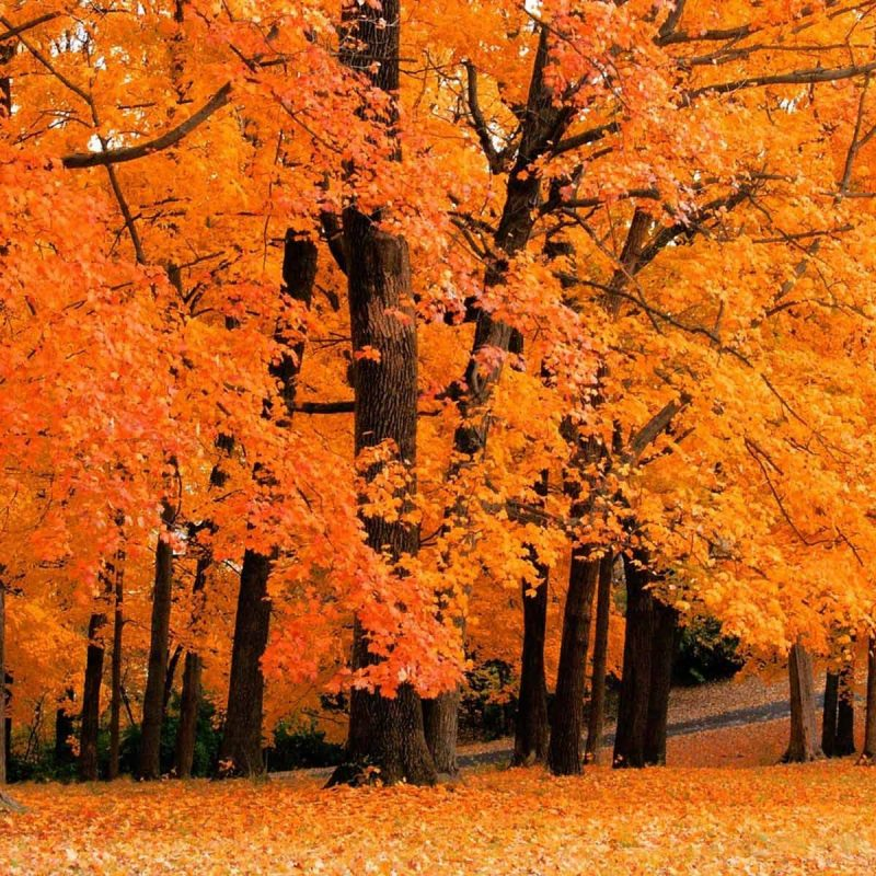10 Most Popular Fall Foliage Wall Paper FULL HD 1080p For PC Background 2020 free download fall foliage desktop wallpaper 42312 hd wallpapers background 800x800