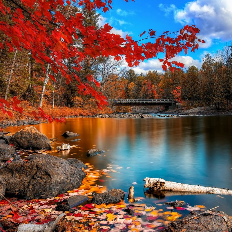 10 Best Fall Foliage Desktop Wallpaper FULL HD 1920×1080 For PC Background 2020 free download fall foliage hd nature 4k wallpapers images backgrounds photos 800x800
